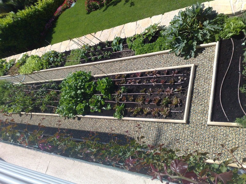 Potager potager for Amenagement jardin potager